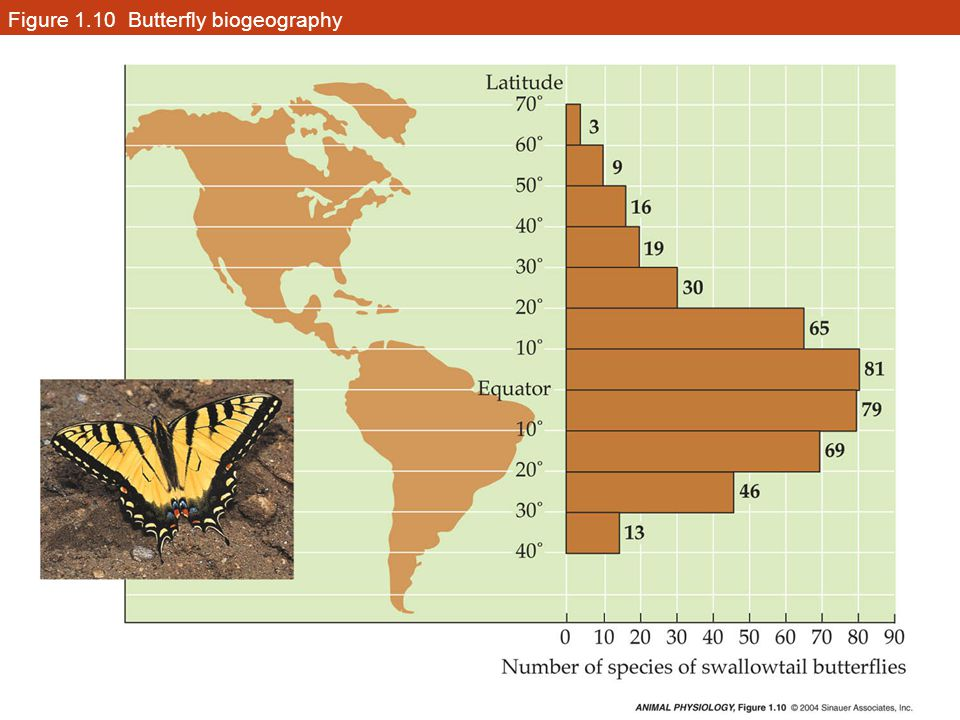 Figure 1.10 Butterfly biogeography