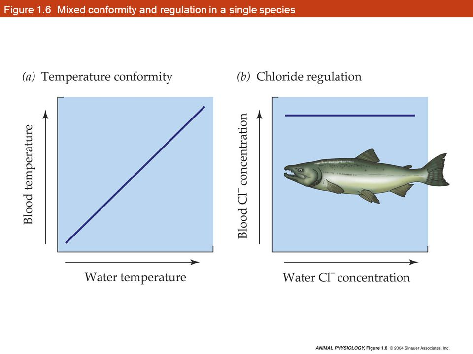 Figure 1.6 Mixed conformity and regulation in a single species