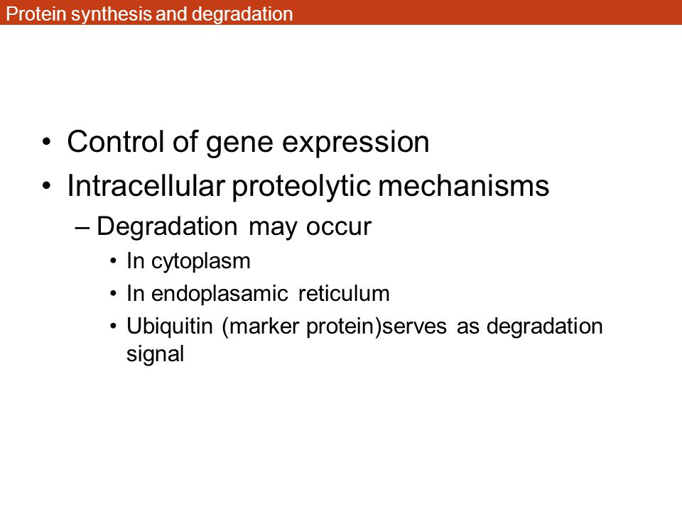 Protein synthesis and degradation
