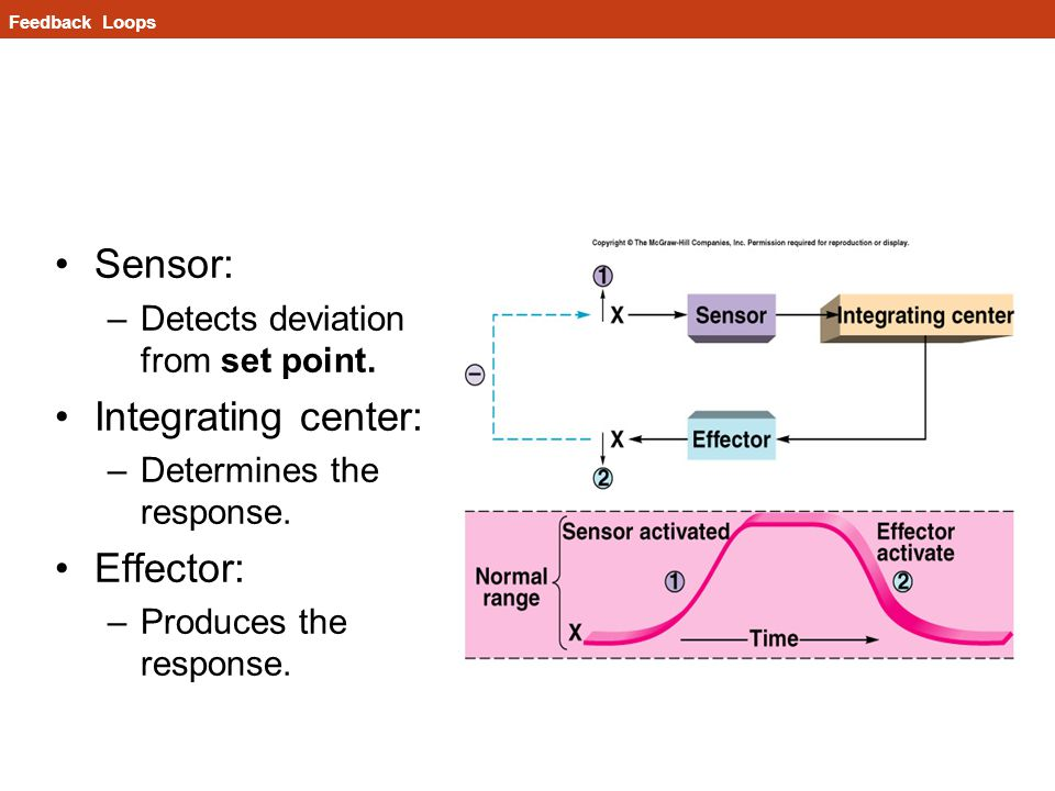 Sensor: Integrating center: Effector: