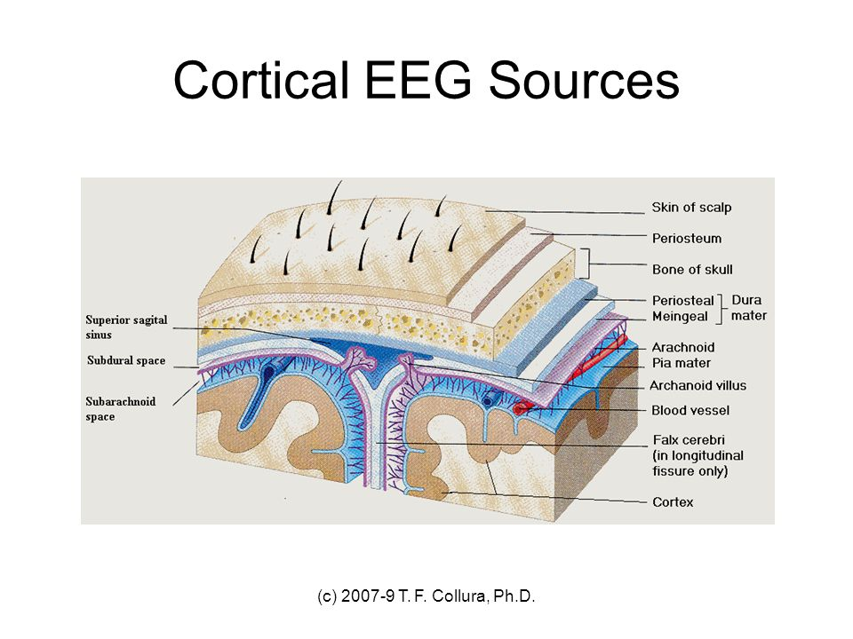 Cortical EEG Sources (c) 2007-9 T. F. Collura, Ph.D.
