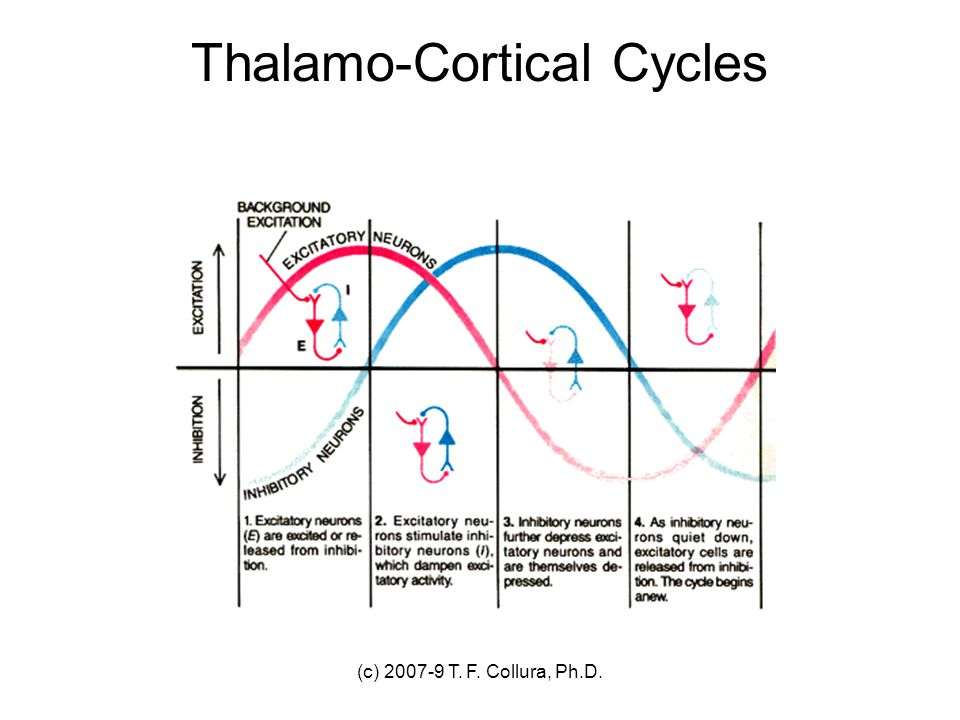 Thalamo-Cortical Cycles