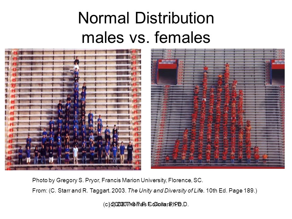 Normal Distribution males vs. females