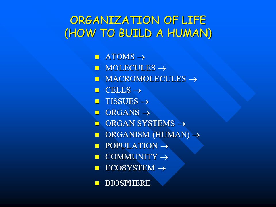 ORGANIZATION OF LIFE (HOW TO BUILD A HUMAN)