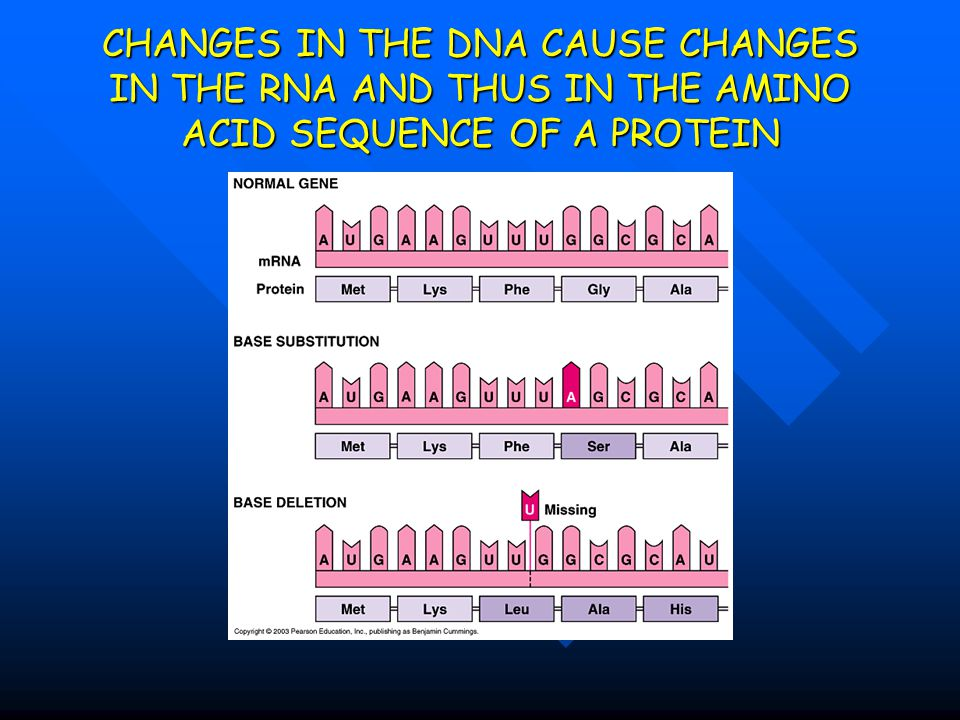 CHANGES IN THE DNA CAUSE CHANGES IN THE RNA AND THUS IN THE AMINO ACID SEQUENCE OF A PROTEIN