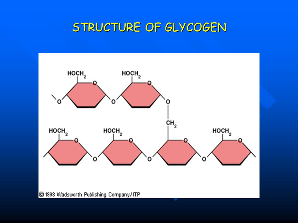 STRUCTURE OF GLYCOGEN