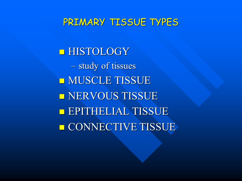 HISTOLOGY MUSCLE TISSUE NERVOUS TISSUE EPITHELIAL TISSUE