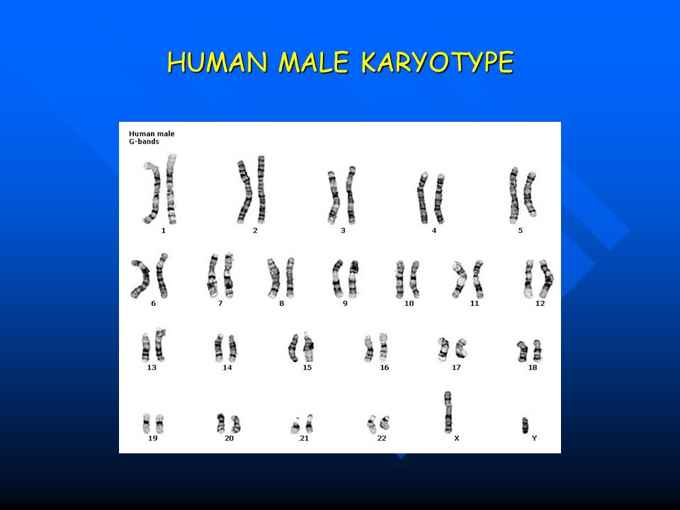 HUMAN MALE KARYOTYPE