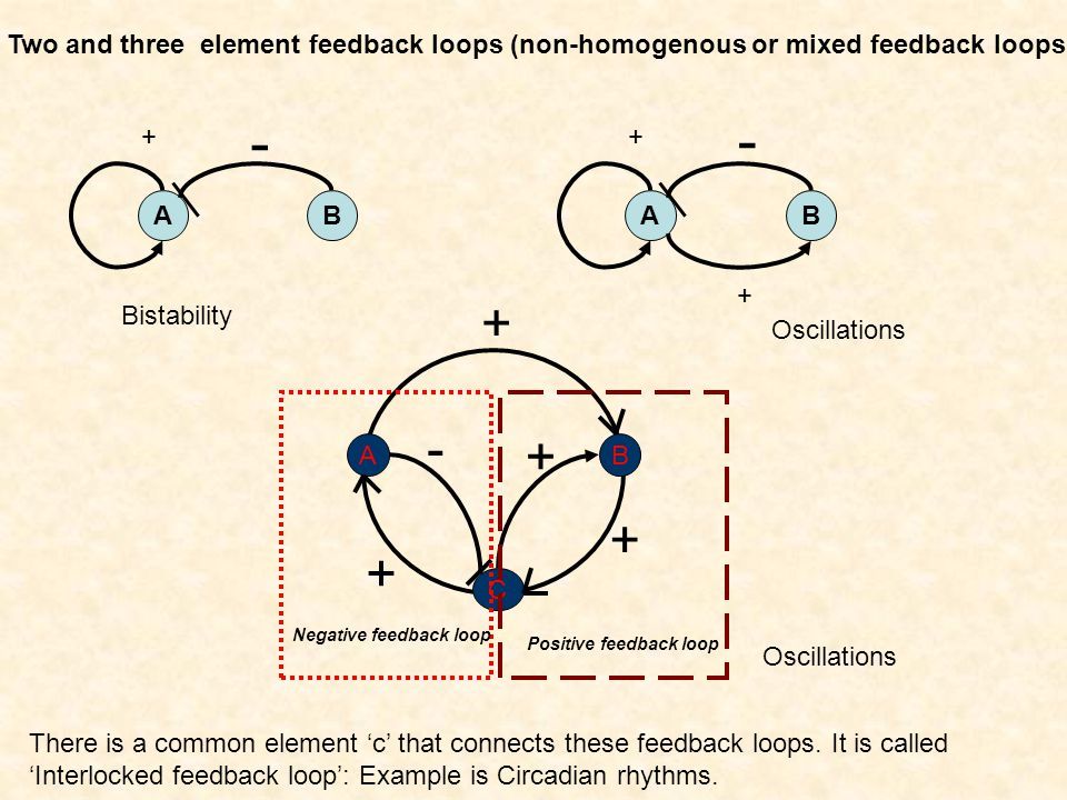 Two and three element feedback loops (non-homogenous or mixed feedback loops)