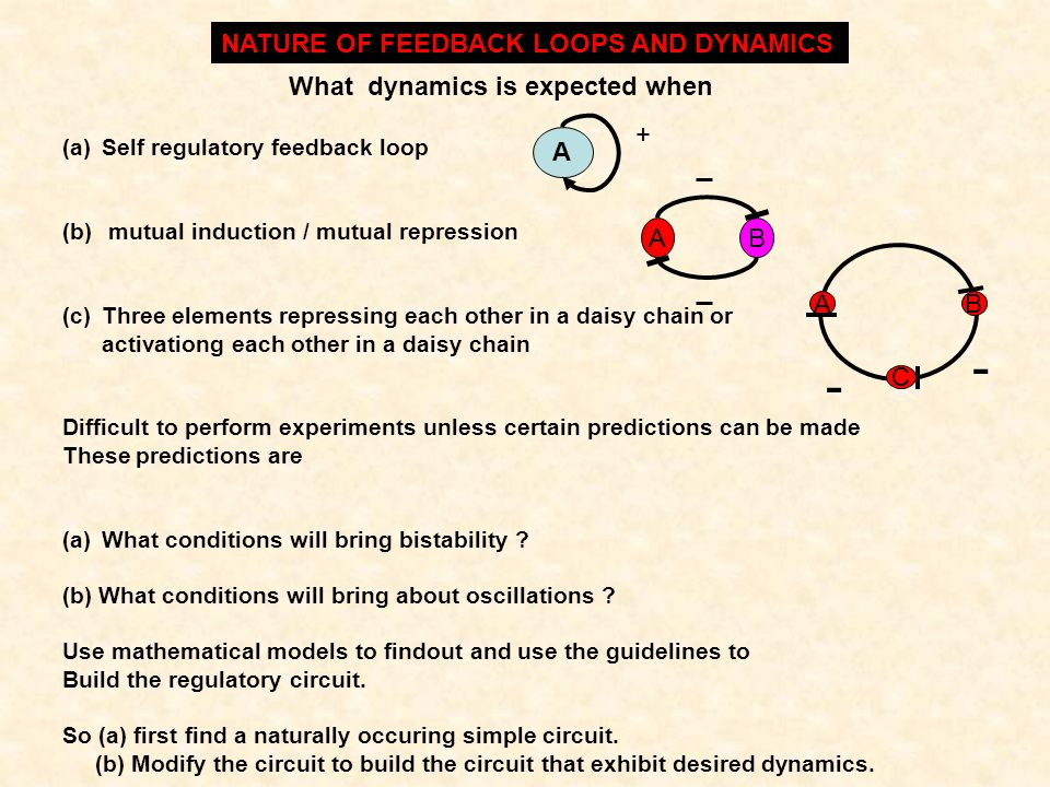 - NATURE OF FEEDBACK LOOPS AND DYNAMICS What dynamics is expected when
