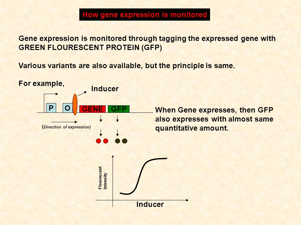 How gene expression is monitored