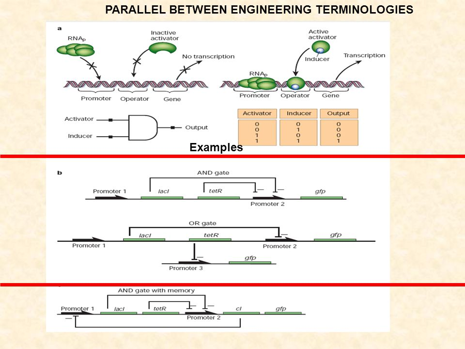 PARALLEL BETWEEN ENGINEERING TERMINOLOGIES