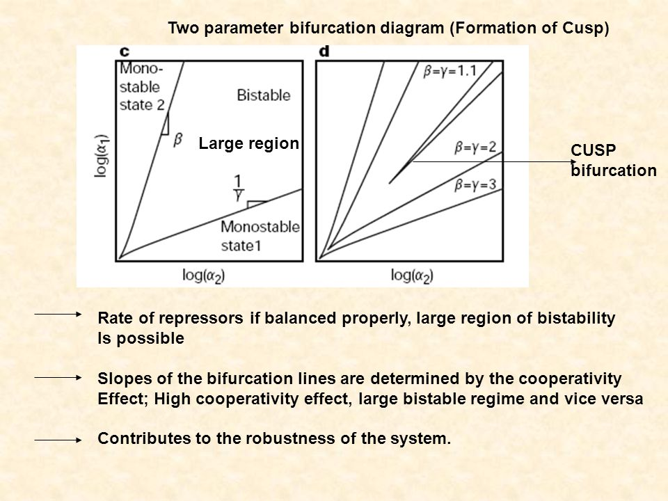 Two parameter bifurcation diagram (Formation of Cusp)