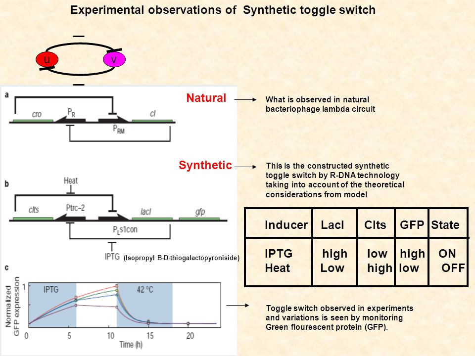 Experimental observations of Synthetic toggle switch