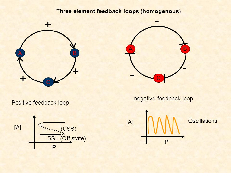 - + - + - + Three element feedback loops (homogenous) A B A B C C