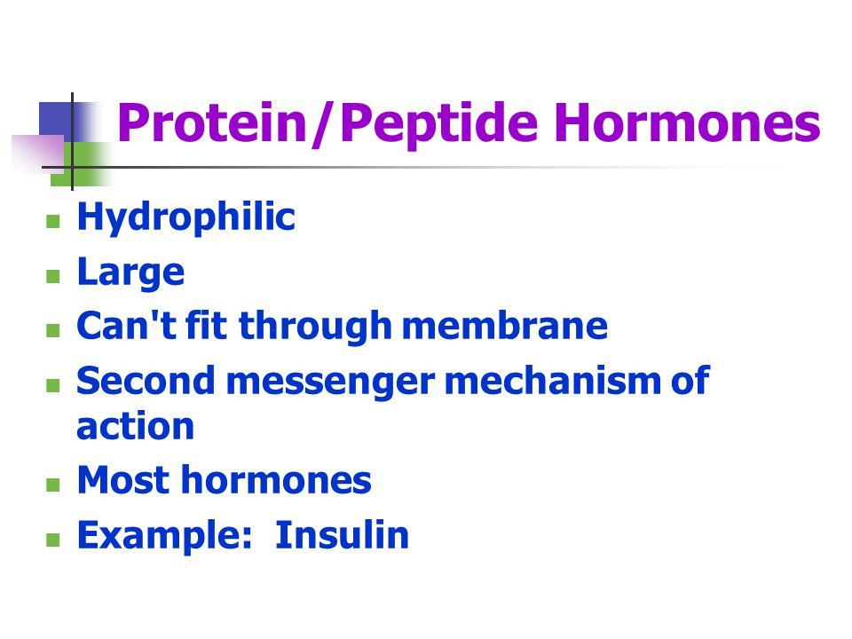 Protein/Peptide Hormones
