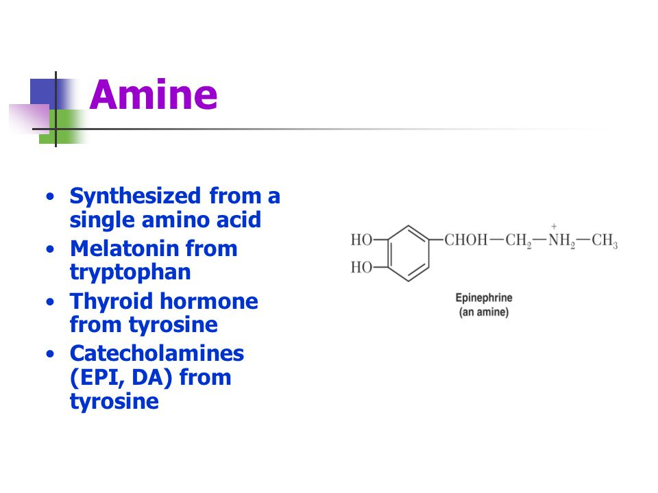 Amine Synthesized from a single amino acid Melatonin from tryptophan
