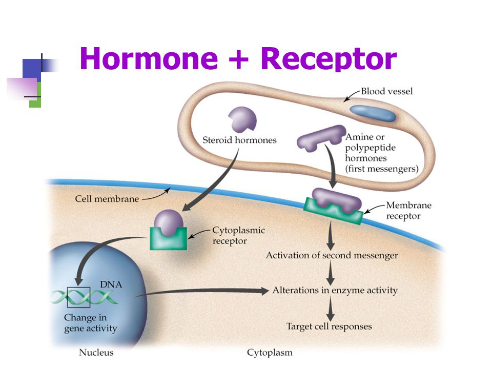 steroid hormone cell signalling