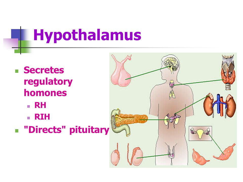 Hypothalamus Secretes regulatory homones RH RIH Directs pituitary