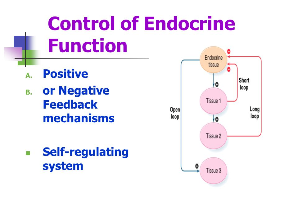 Control of Endocrine Function