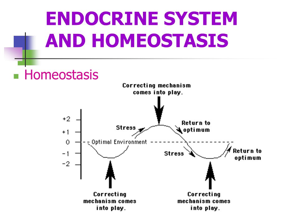 ENDOCRINE SYSTEM AND HOMEOSTASIS