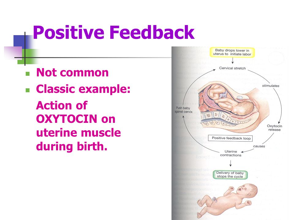 Positive Feedback Not common Classic example: