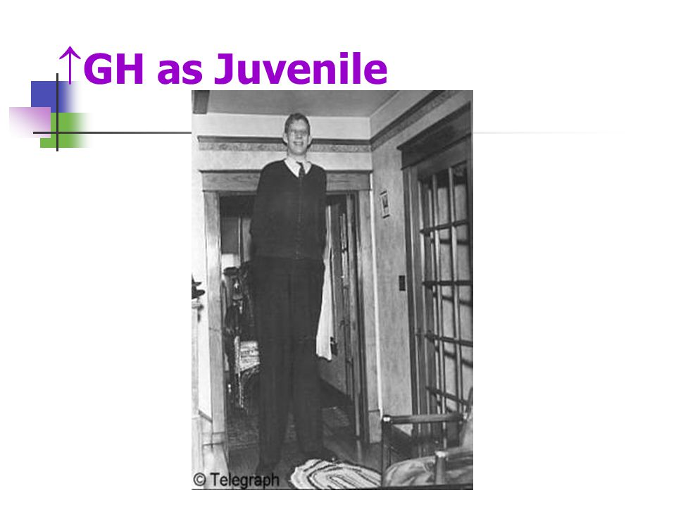 GH as Juvenile