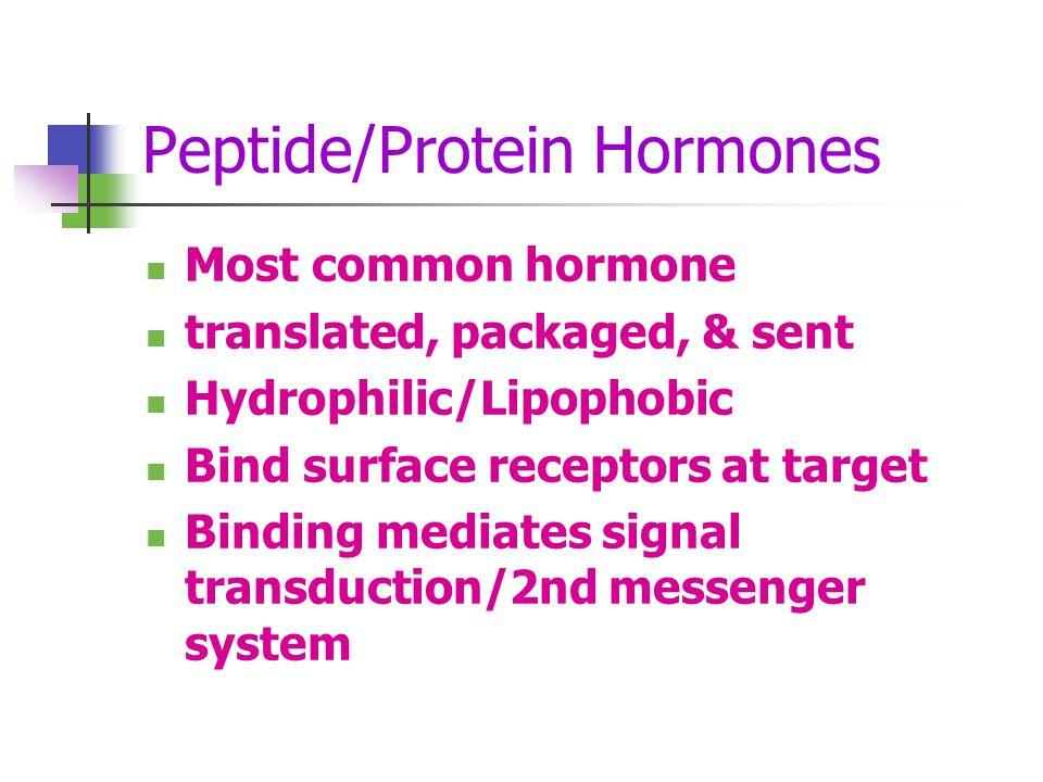 Peptide/Protein Hormones
