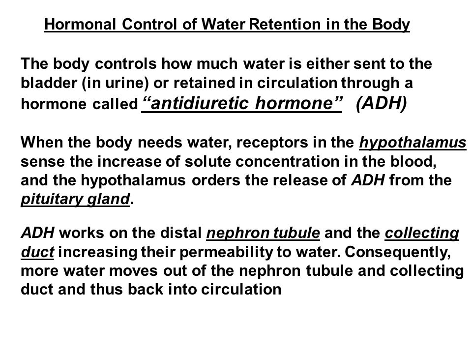 Hormonal Control of Water Retention in the Body