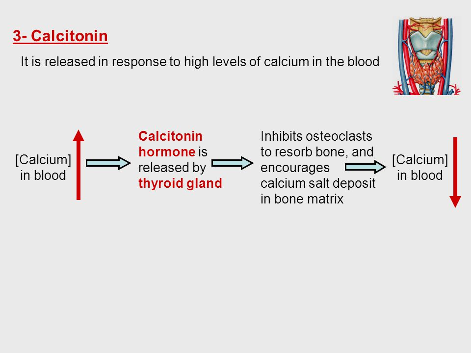 3- Calcitonin It is released in response to high levels of calcium in the blood. Calcitonin hormone is released by thyroid gland.