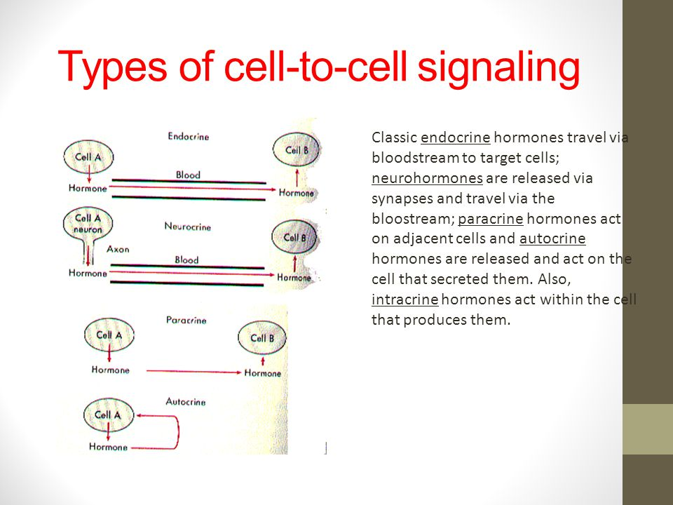 Types of cell-to-cell signaling