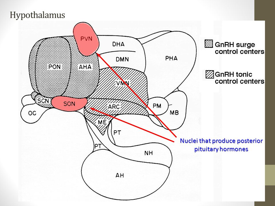 Nuclei that produce posterior pituitary hormones
