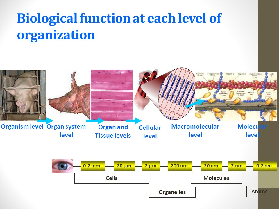 Biological function at each level of organization