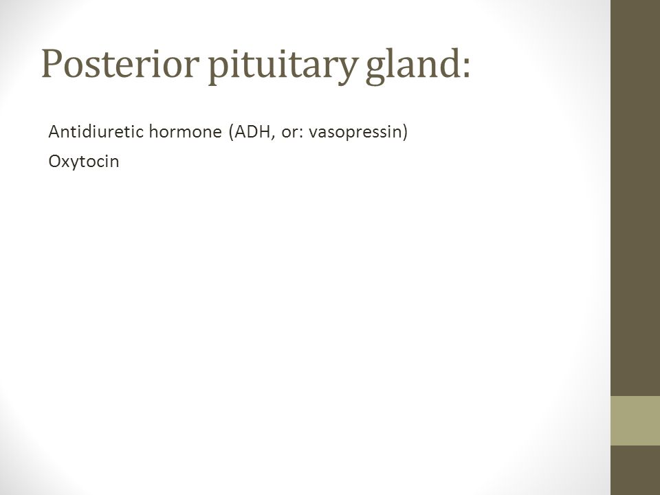 Posterior pituitary gland: