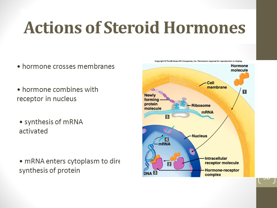 Actions of Steroid Hormones