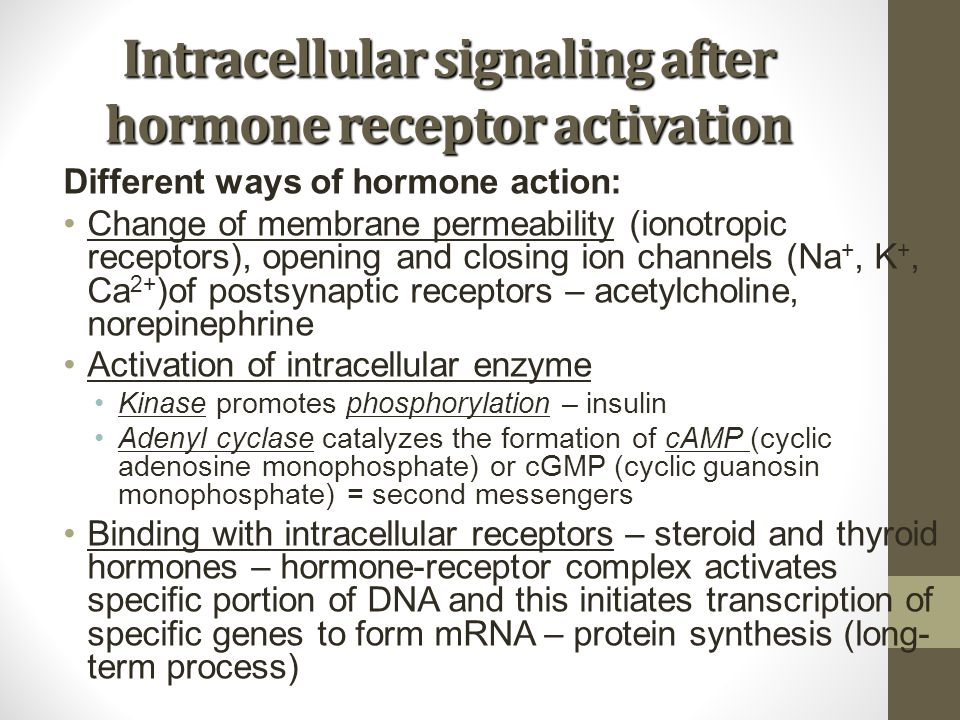 Intracellular signaling after hormone receptor activation