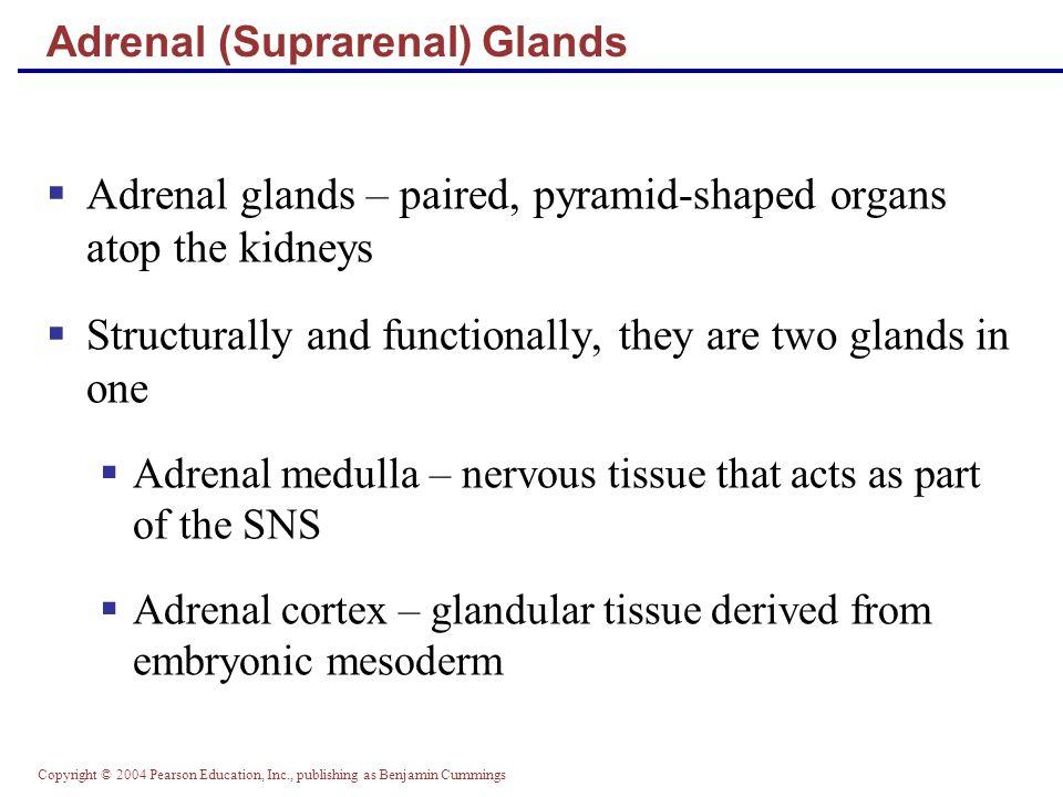 Adrenal (Suprarenal) Glands