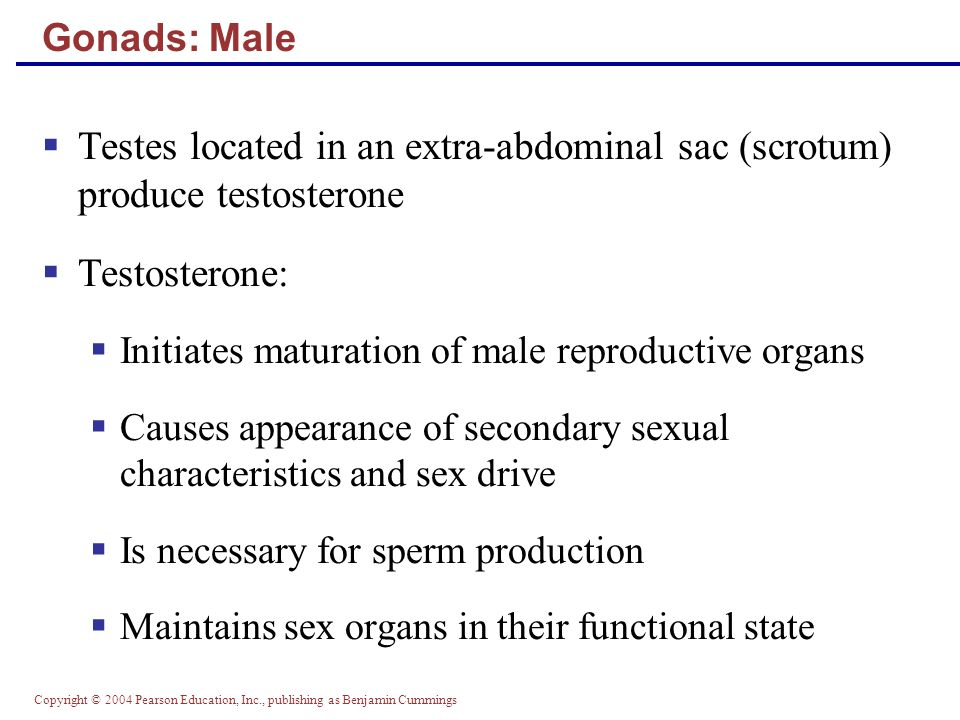 Gonads: Male Testes located in an extra-abdominal sac (scrotum) produce testosterone. Testosterone:
