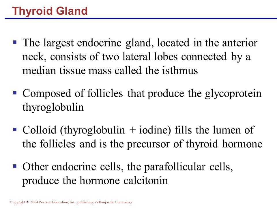 Composed of follicles that produce the glycoprotein thyroglobulin