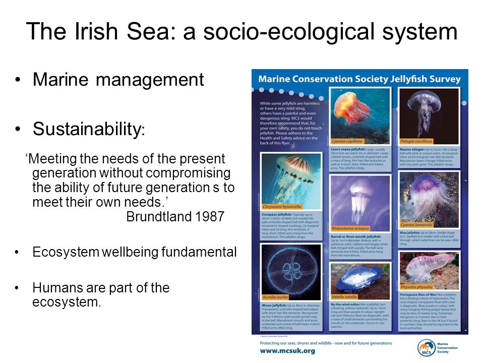 The Irish Sea: a socio-ecological system