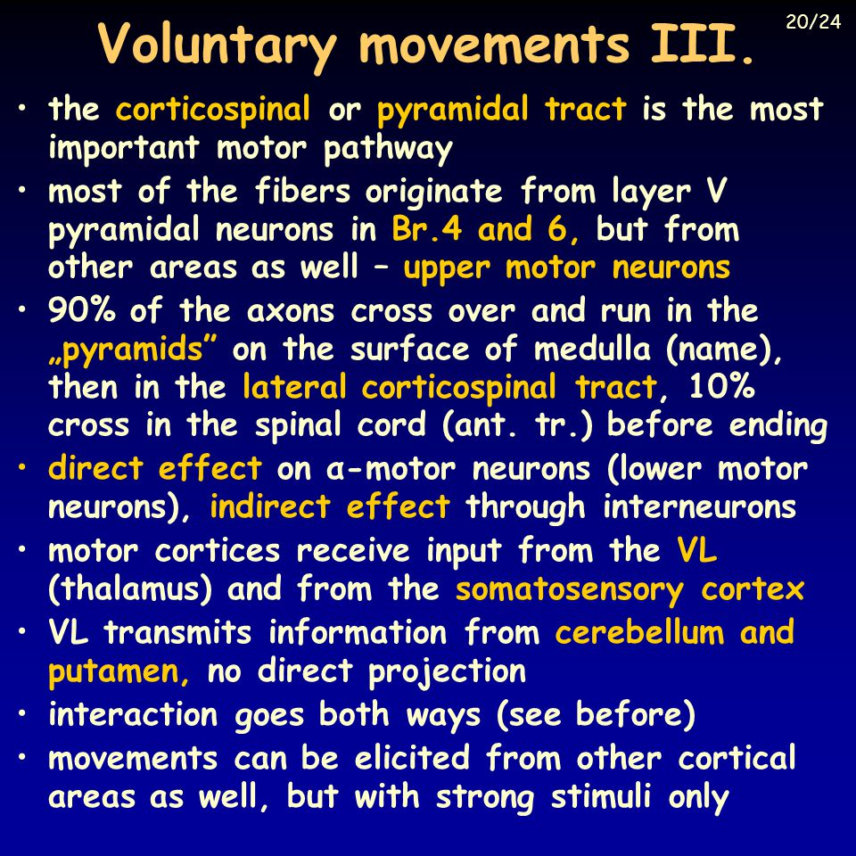 Voluntary movements III.