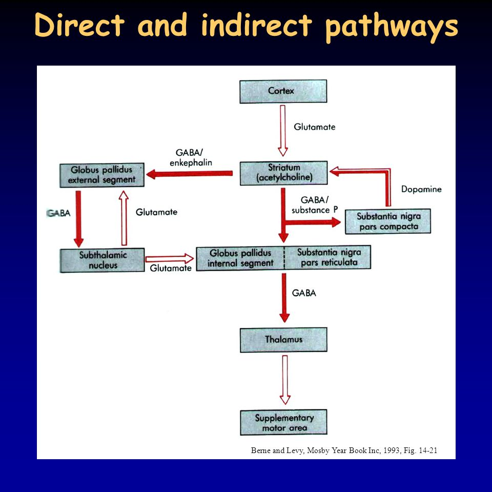 Direct and indirect pathways