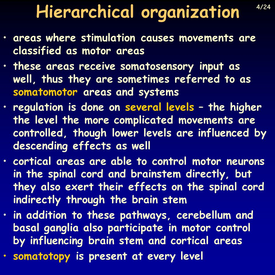 Hierarchical organization