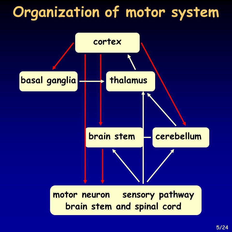 Organization of motor system