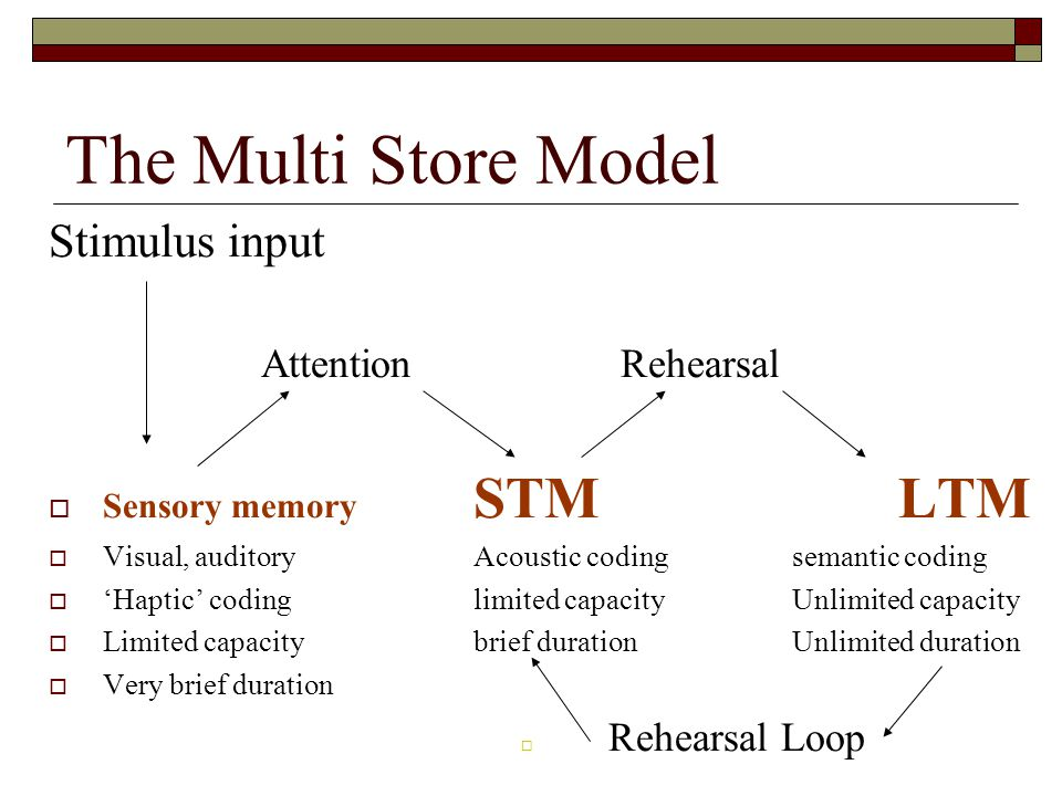 The Multi Store Model Stimulus input Attention Rehearsal