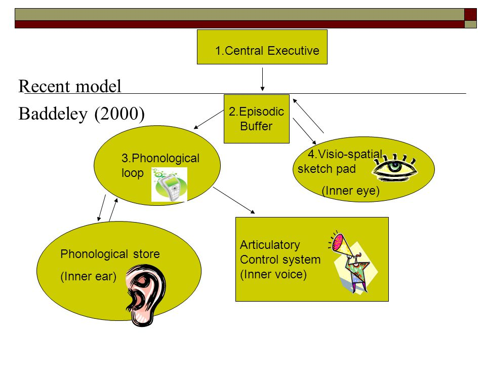 Recent model Baddeley (2000) 1.Central Executive 2.Episodic Buffer