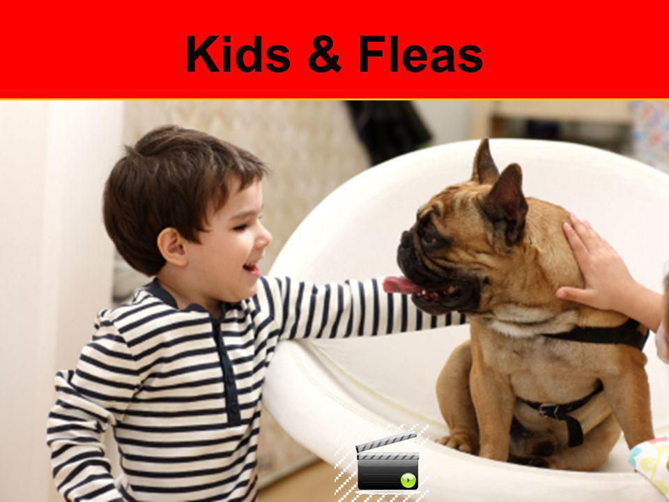 Kids & Fleas