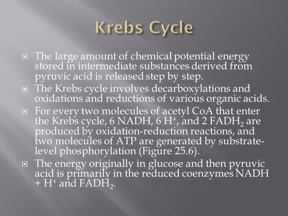 Krebs Cycle The large amount of chemical potential energy stored in intermediate substances derived from pyruvic acid is released step by step.