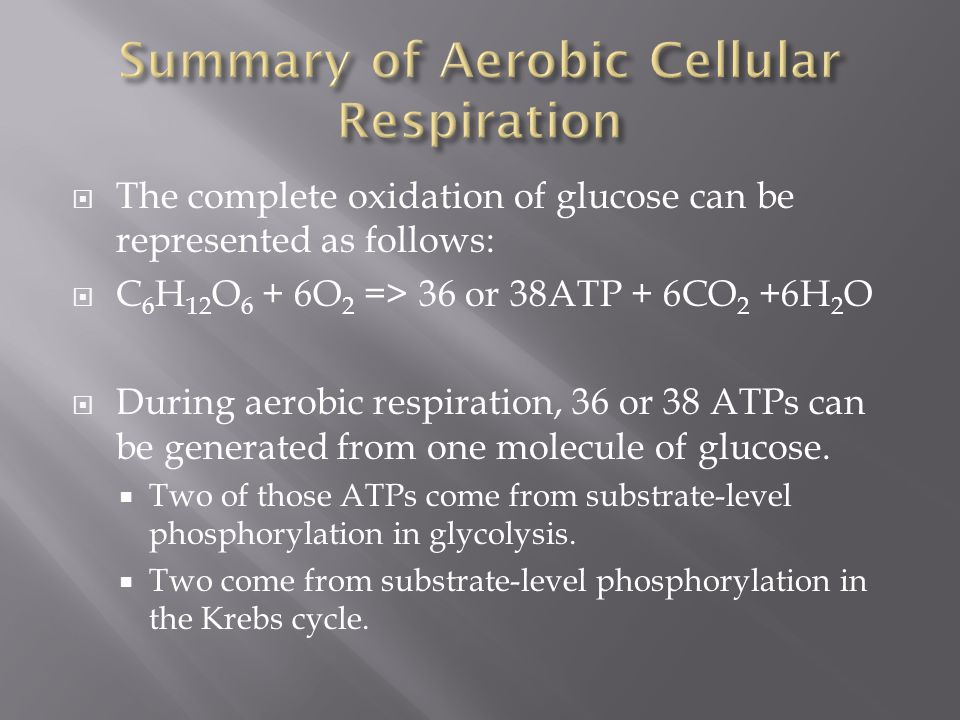 Summary of Aerobic Cellular Respiration