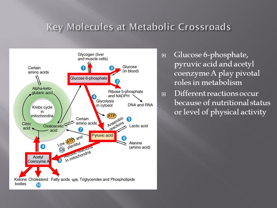 Key Molecules at Metabolic Crossroads
